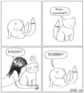 Как моются коты