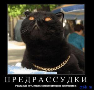 реальный кот