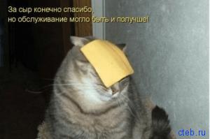 спасибо за сыр