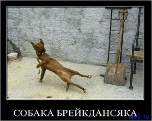 Собака улыбка