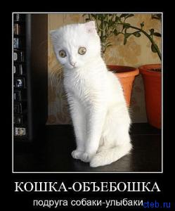 кошка объебошка