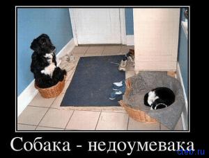 собака недоумевака