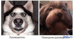 Собака руководяка