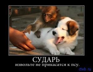 не извольте прикасаться к псу