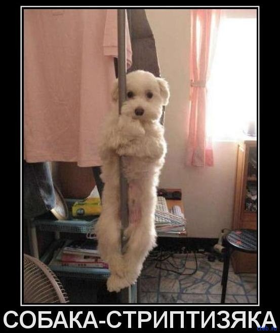 собака стриптизяка
