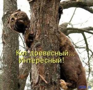 древесный кот