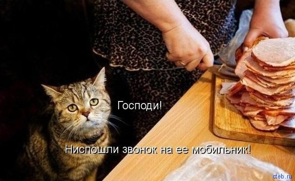 Мольбы кота
