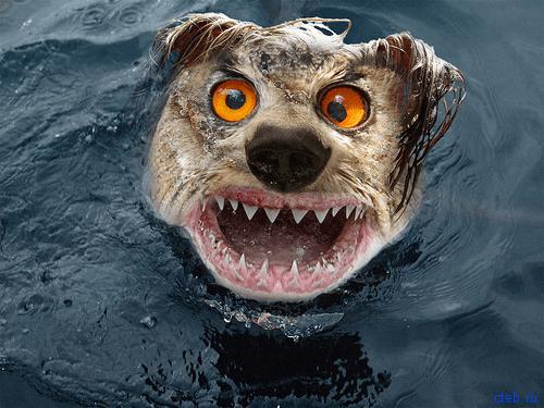 Пойдем поплаваем