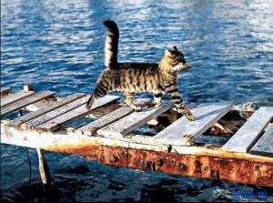 васька рыбак