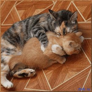 Смешные кошки
