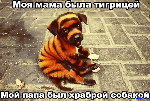 мама тигр папа храбрый пес