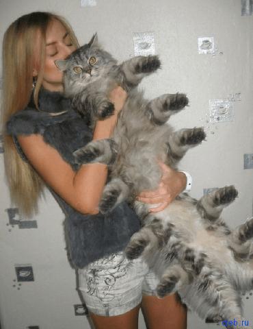 кот сороконожка