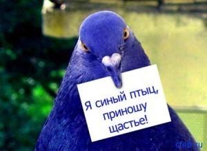 Синый птыц