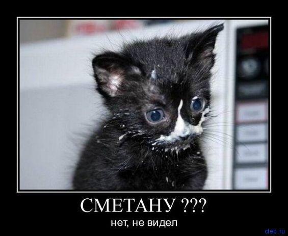 кот не ворует опять