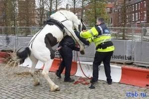 на лошадь похож?