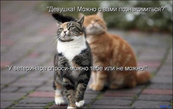 Кошачьи радости