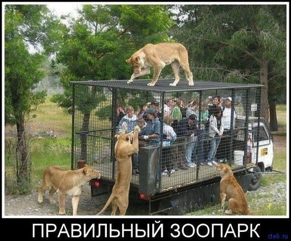 Правильный зоопарк