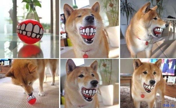 Собака улыбака - шары гоняка