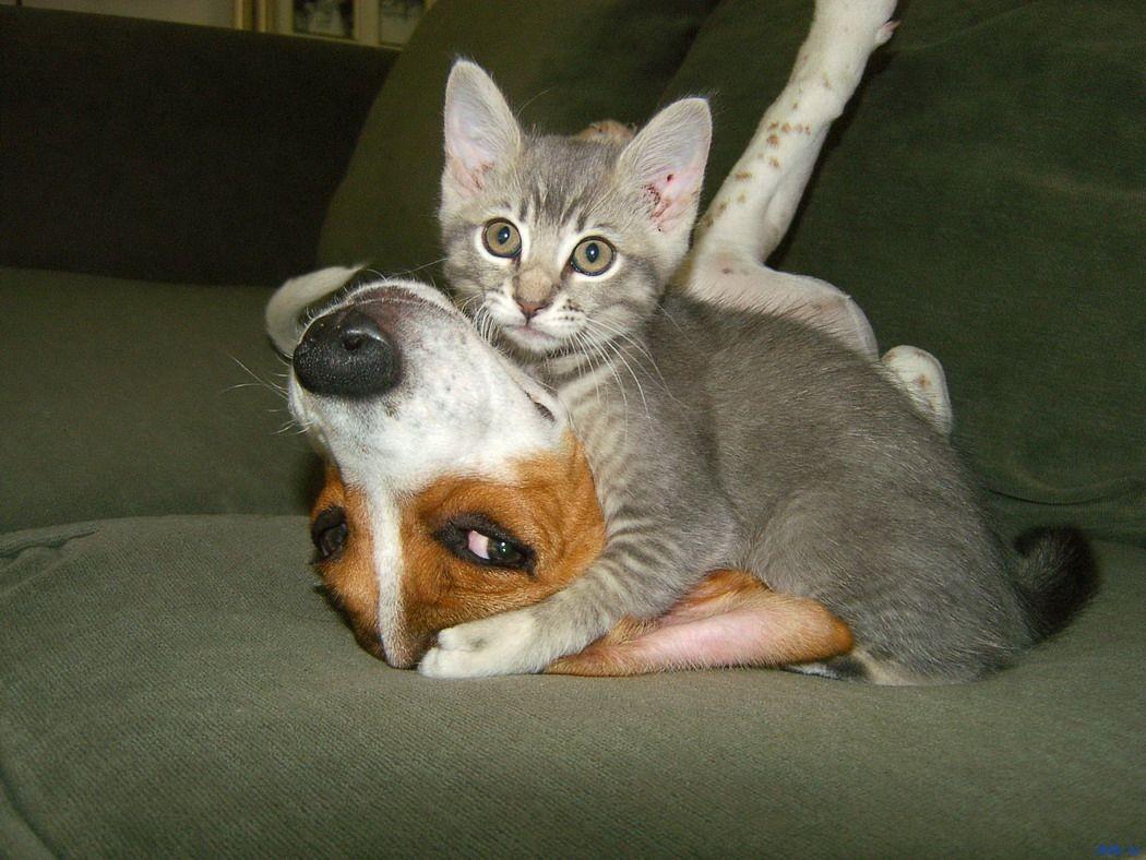 Картинки по запросу Забавные котейки
