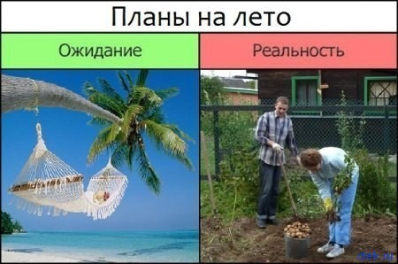 Планы на лето