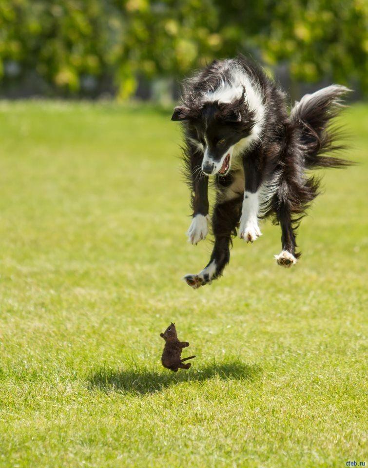 Собаки попрыгаки