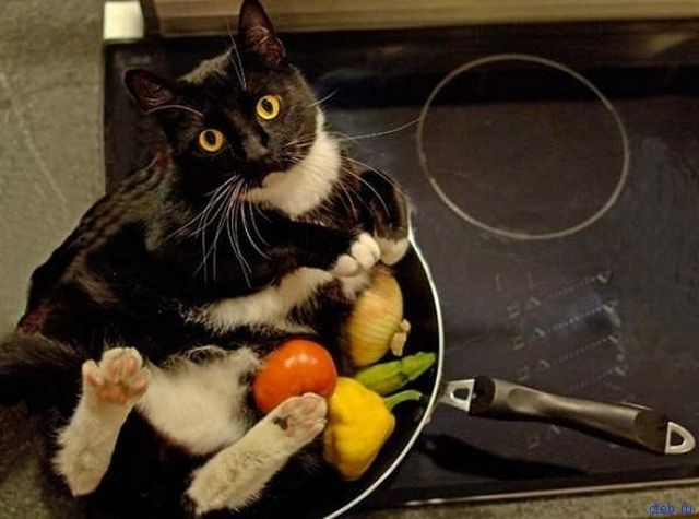 Чего чего говоришь с котом?