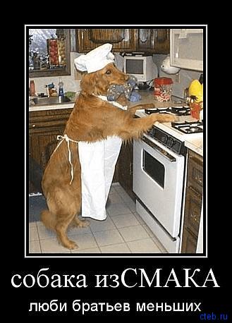 собака из смака
