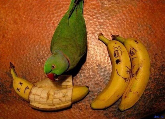 попугай убийца