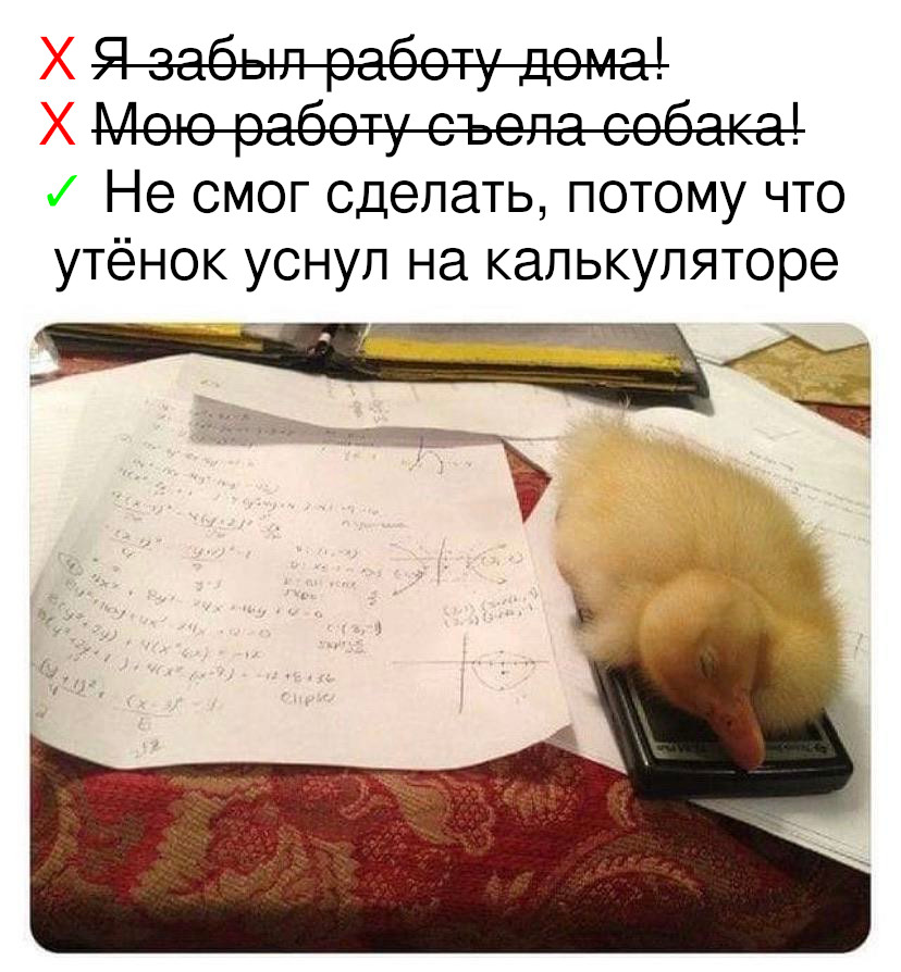 Твою работу съела собака?