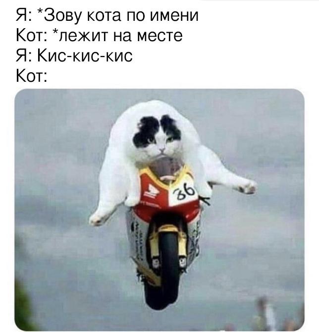 Как позвать кота