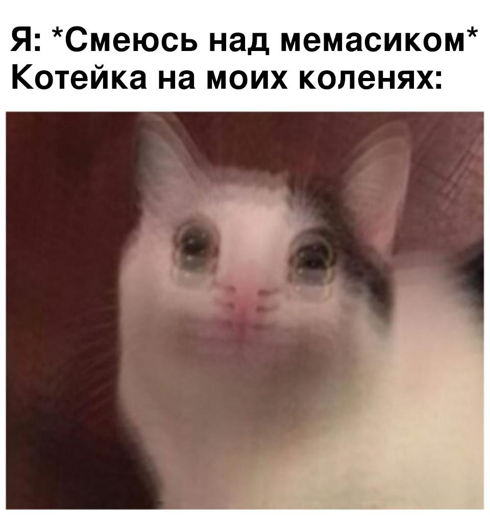 Мой кот, когда я смотрю мемасики