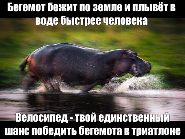 Как победить бегемота