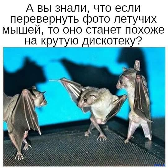 Дискотека летучих мышей