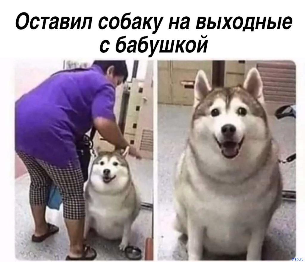 Оставил собаку с бабушкой